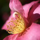 Hot In Pink by Joy Watson