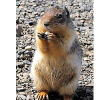 Mt Howard Ground Squirrel Photographic Print