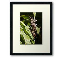 Mating Time Framed Print