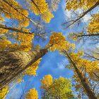 Towards the blue sky by Veikko  Suikkanen