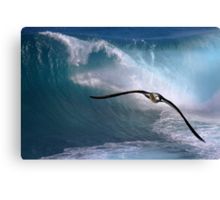 Freedom To Soar Canvas Print