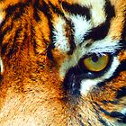 Tiger eyes by Christina Brunton