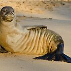 Endangered Hawaiian Monk Seal by thatche2