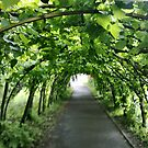 Lime Archway Christchurch by Shoshonan