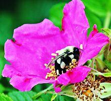 Bumble Bee in Flower by Unelanvhi