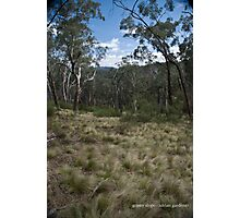 Grassy Slope Photographic Print