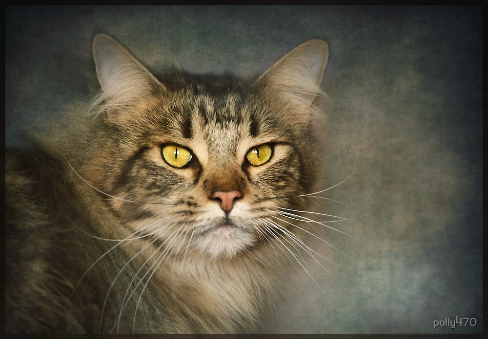 Maine Coon by polly470