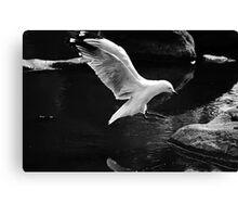 A perfect landing Canvas Print