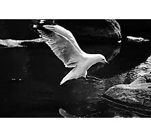 A perfect landing Photographic Print
