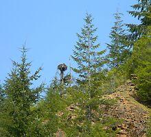 Eagle Nest by wasdstomp