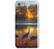evening on the bosque iPhone Case/Skin