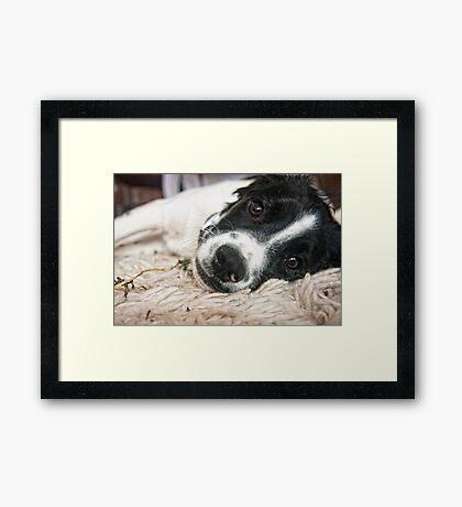 Benson at 6 Months Framed Print
