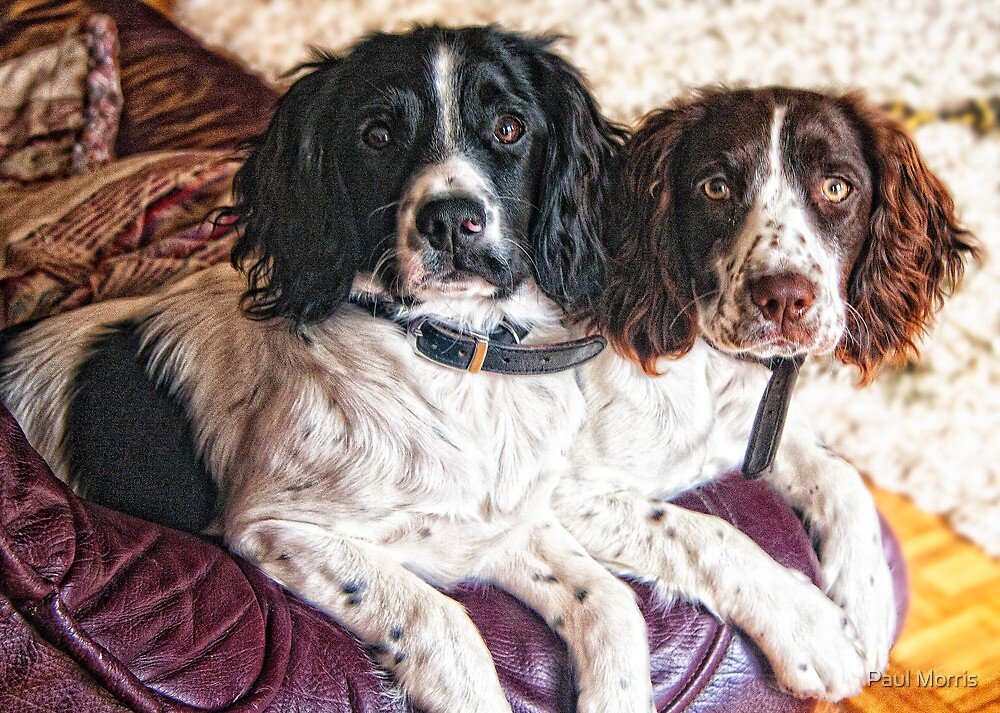 Benson and Jess - best friends by Paul Morris
