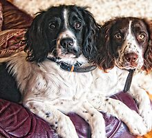 Benson and Jess - best friends by Paul Morris