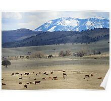 Cattle Country Poster