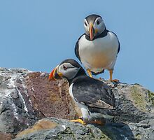 Puffin Island by Roger Hall