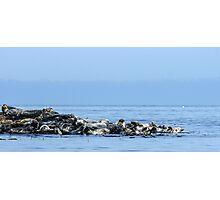 Seal Line Photographic Print