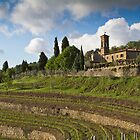 Italian Vineyard by vivsworld
