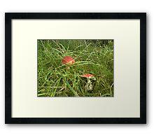 Fairy Land Framed Print