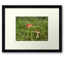 Fairy Land Framed Print