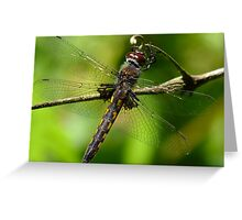 Hanging On The Vine Greeting Card