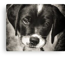 Guess What I'm Thinking Canvas Print