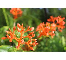 Coral Dew Photographic Print
