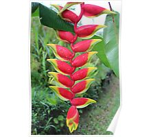 Layered Heliconia Poster