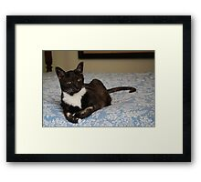 Remembering Smokey ~ June 2012 Framed Print