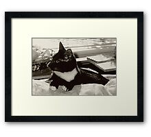 Smokey 2000 Framed Print