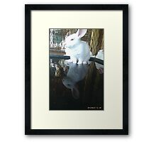 Cool bunny wade-N Pool Framed Print