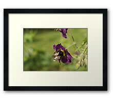 Bumble About Framed Print
