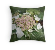 Variegated Lace Cap Hydrangea - Pink and White Throw Pillow