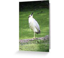 Black crowned night heron yoga pose Greeting Card