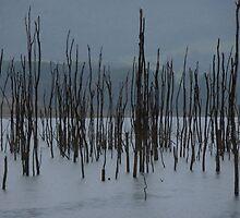 Drowned Trees, Lake Jounama, Snowy Mountains, Australia. by kaysharp