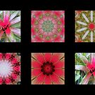Flowers and Kaleidoscopes #3 by Esperanza Gallego