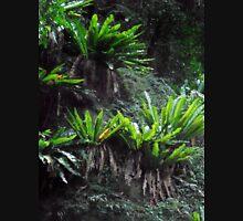 Rainforest Beauty, Minnamurra Falls, NSW, Australia. Unisex T-Shirt