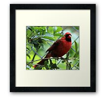 The Red Bird  Out Front # 2 Framed Print