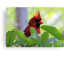 The Red Bird  Out Front # 3 Canvas Print