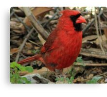 The Red Bird  Out Front # 5 Canvas Print