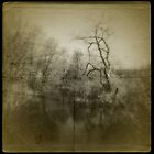 """""""Even trees do not die without a groan."""" ~Henry David Thoreau by Catherine Restivo"""