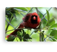 The Red Bird  Out Front # 9 Canvas Print