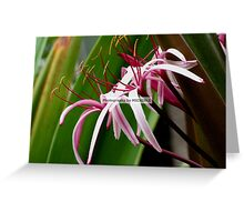 Feathery Flowers Greeting Card