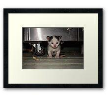 Stray Kitten  Framed Print