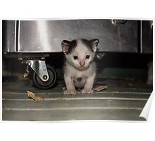 Stray Kitten  Poster