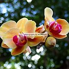 Trish's Orchids by Michiale