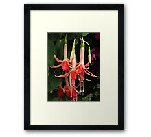 Fuchsia Fireworks! Framed Print