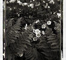 Bracken Fern & Wild Roses by Alice Schuerman