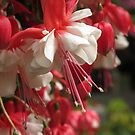 Red and White by Pat Yager