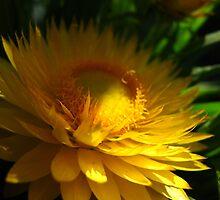 Golden tones by MarianBendeth